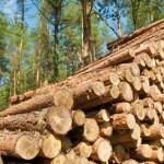Holz, Forstwirtschaft, Rohholz, Baumstämme