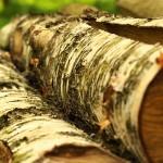 Stapel aus Birkenholz